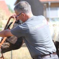 Pferdesicherung