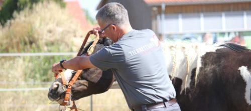 Weiterbildung Pferdesicherung