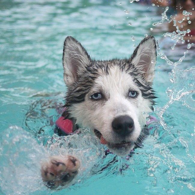 Hundeschwimmen Erdmannsdorf