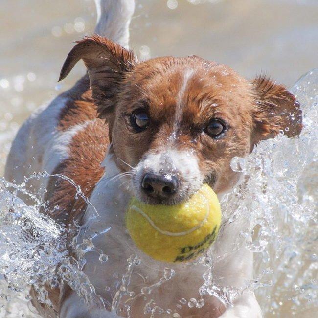 Hundeschwimmen Neukirchen