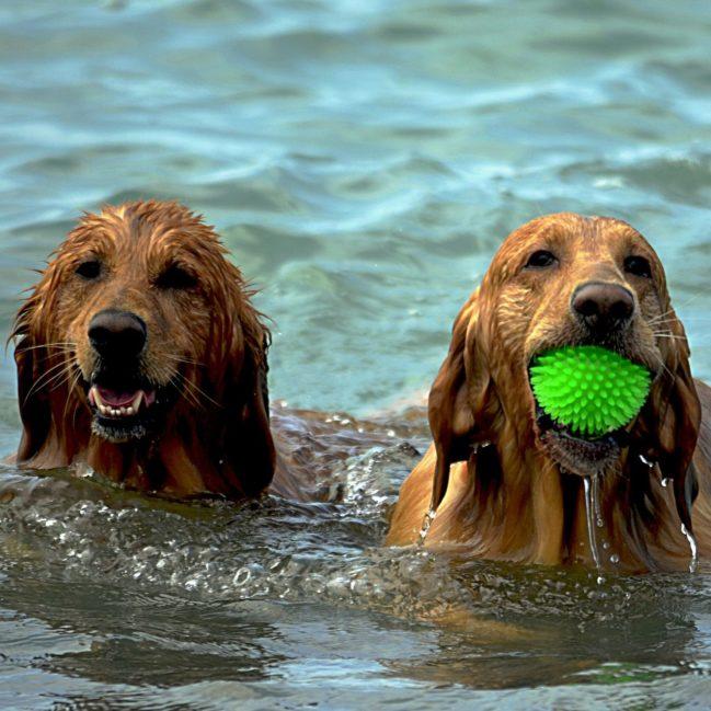 Hundeschwimmen Lugau